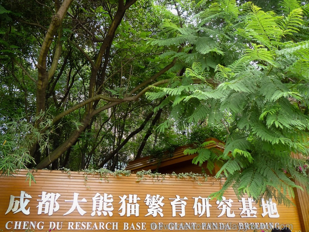 Chendgu Panda Base