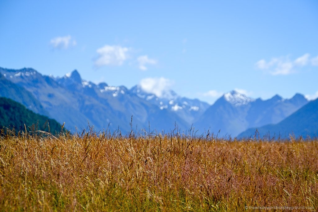 The Road to Milford Sound: the most spectacular views on the Fiordland drive!