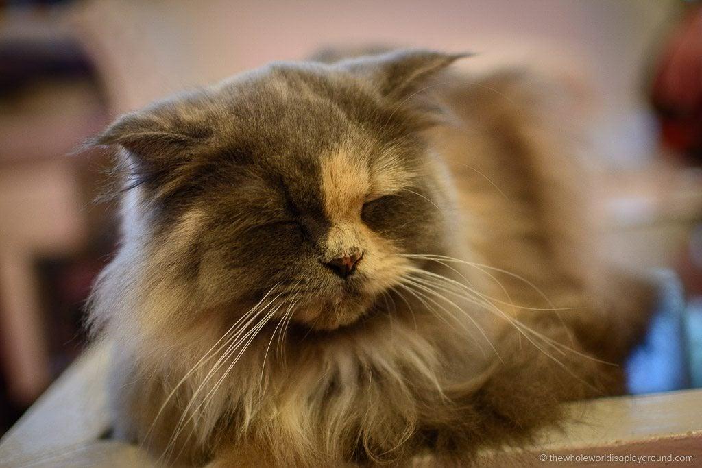 Visit Bangkok Cat Cafe Caturday ©thewholeworldisaplayground