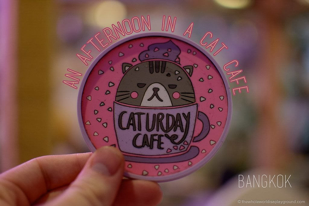 Visit Bangkok Cat Cafe Caturday (31)