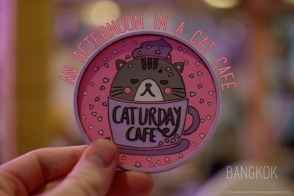 Visit Bangkok Cat Cafe Caturday (31)