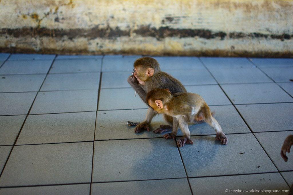 Bagan Myanmar travel tips ©thewholeworldisaplayground