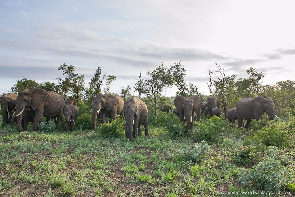 Inyati Game Lodge Sabi Sands South Africa Review ©thewholeworldisaplayground