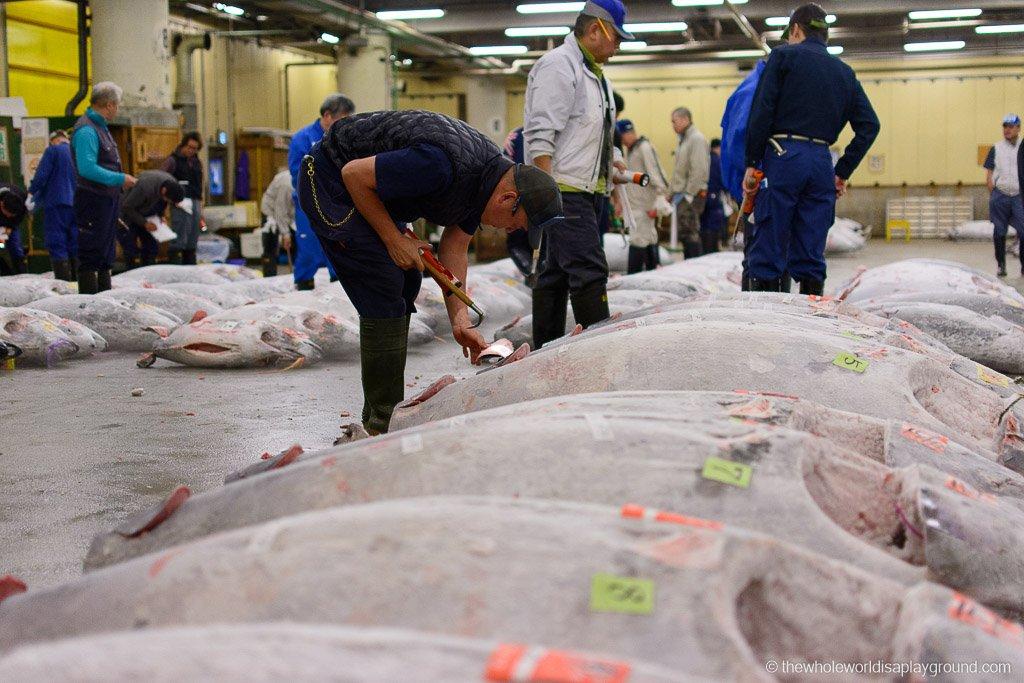 Visit Tsukiji fish market tuna auction Tokyo-23