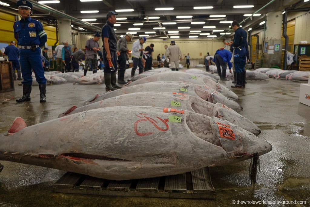 Ultimate Guide How To Visit The Tsukiji Fish Market Tuna Auction Tokyo The Whole World Is A Playground