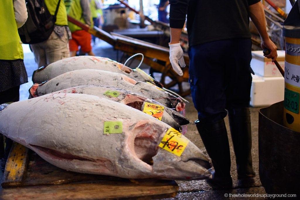 Visit Tsukiji fish market tuna auction Tokyo-41
