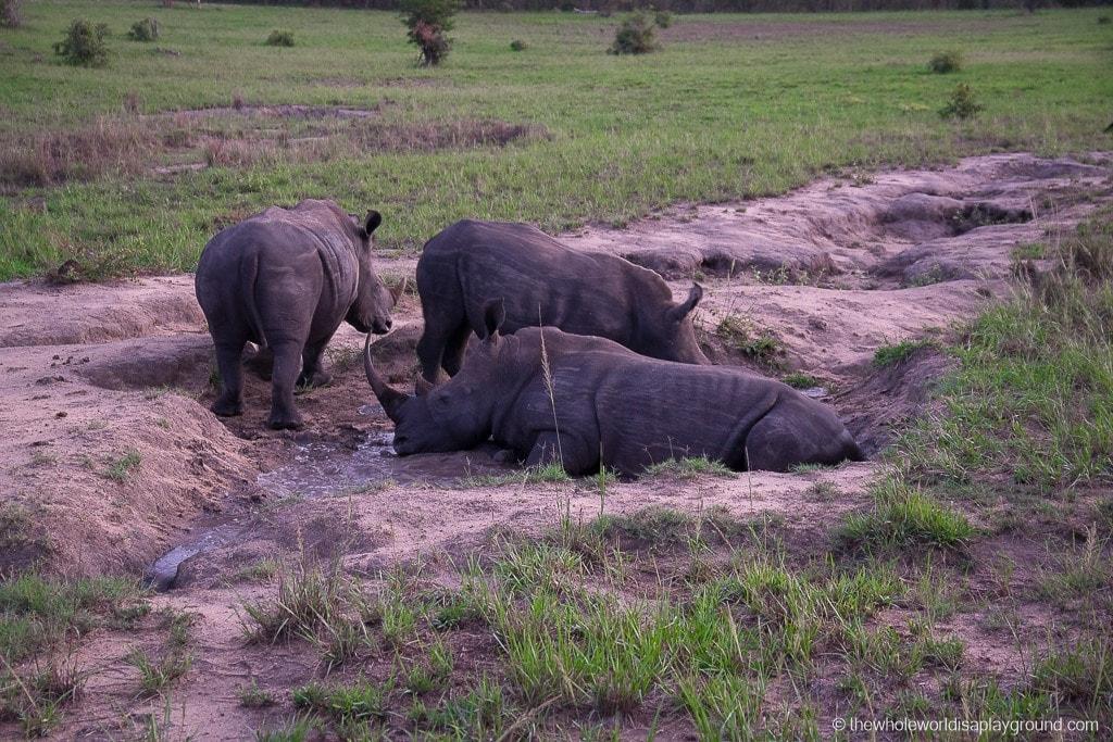 South Africa Kruger Safari Big 5 Best Photos-12