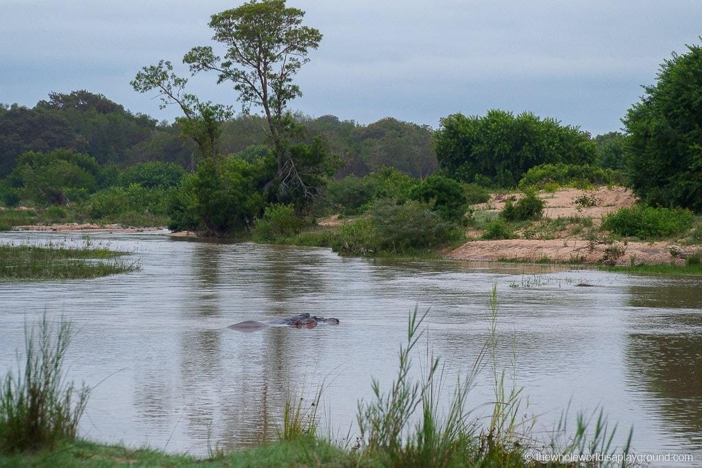 South Africa Kruger Safari Big 5 Best Photos-14