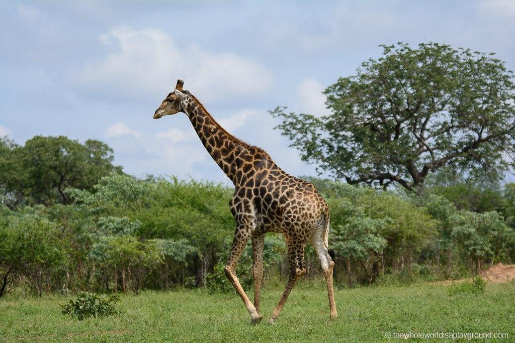 South Africa Kruger Safari Big 5 Best Photos-15