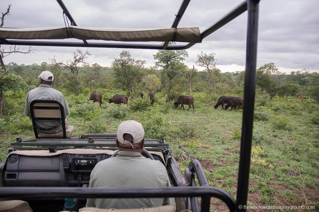 South Africa Kruger Safari Big 5 Best Photos-16