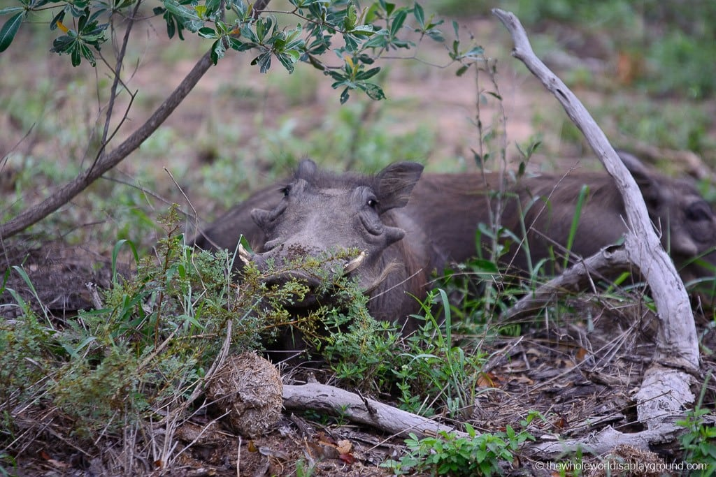 South Africa Kruger Safari Big 5 Best Photos-19