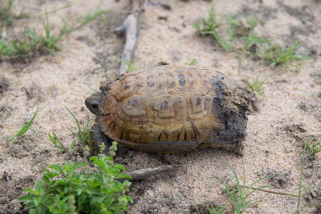 South Africa Kruger Safari Big 5 Best Photos-20