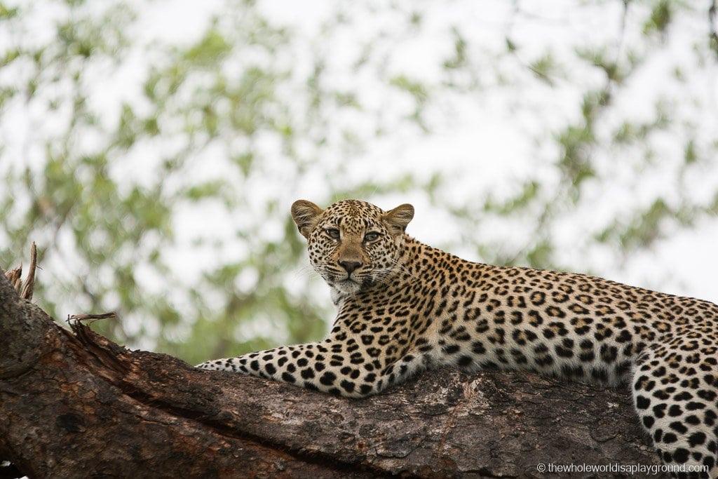 South Africa Kruger Safari Big 5 Best Photos-21