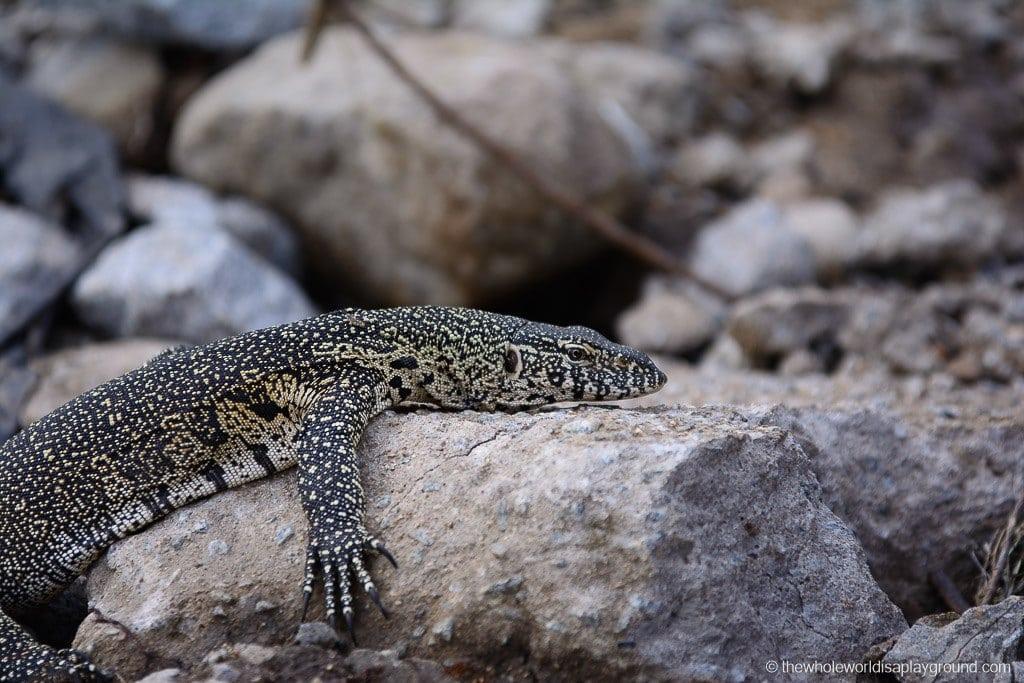 South Africa Kruger Safari Big 5 Best Photos-22