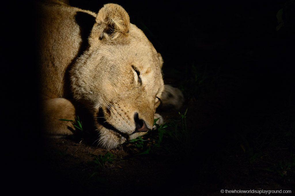 South Africa Kruger Safari Big 5 Best Photos-25