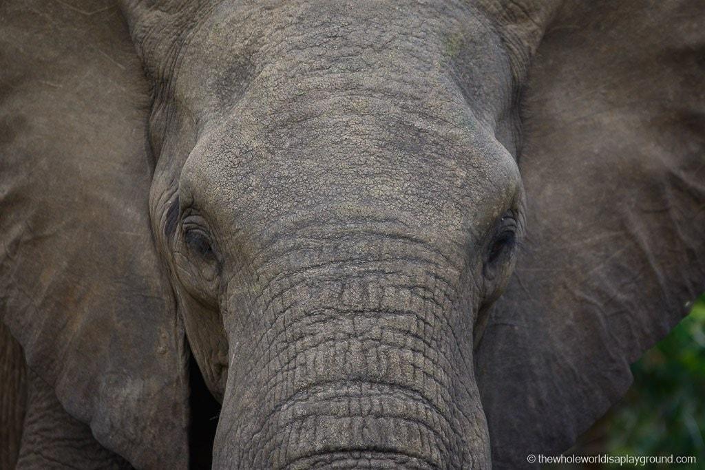 South Africa Kruger Safari Big 5 Best Photos-29