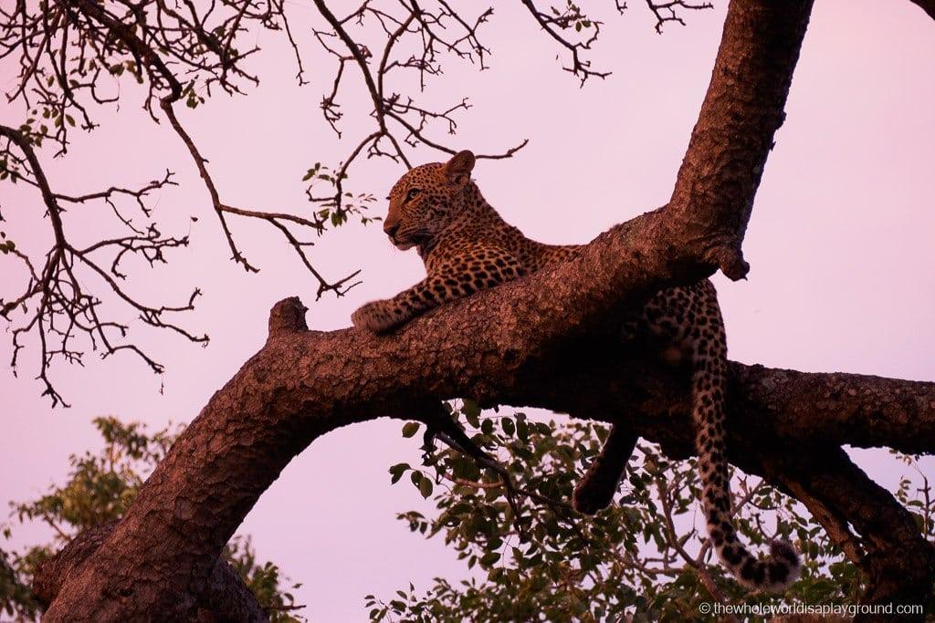South Africa Kruger Safari Big 5 Best Photos-30