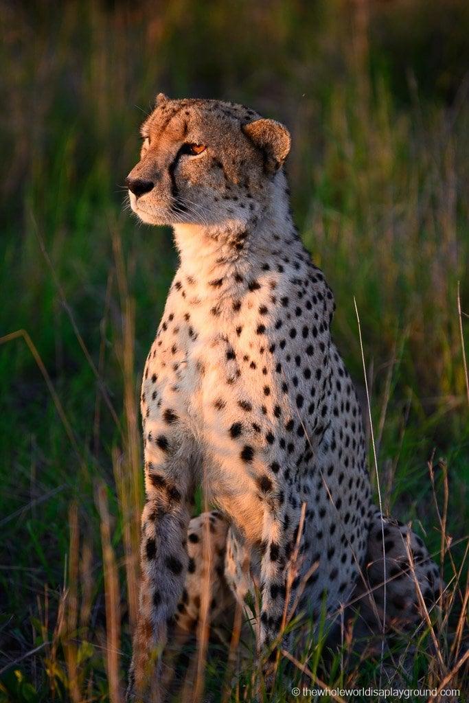 South Africa Kruger Safari Big 5 Best Photos-4