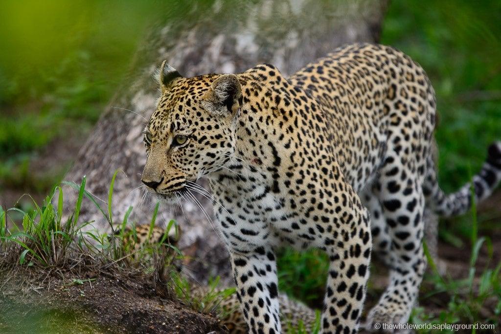 South Africa Kruger Safari Big 5 Best Photos-40