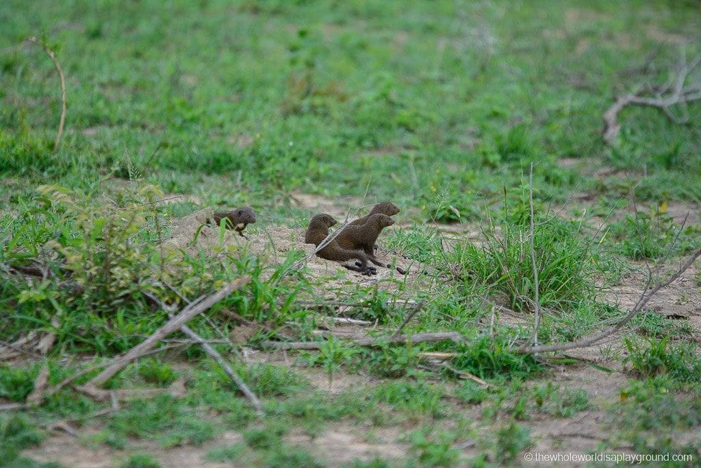 South Africa Kruger Safari Big 5 Best Photos-41