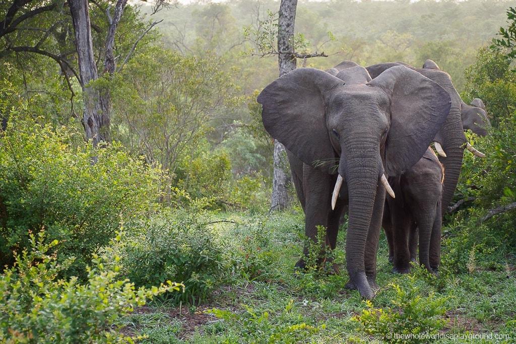 South Africa Kruger Safari Big 5 Best Photos-45