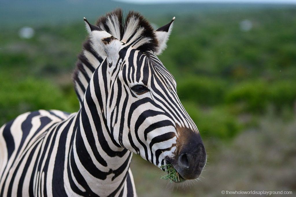 South Africa Kruger Safari Big 5 Best Photos-50