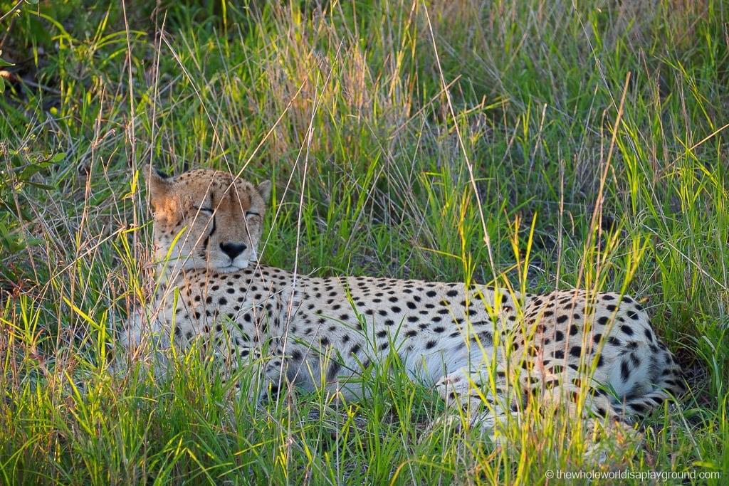 South Africa Kruger Safari Big 5 Best Photos-8