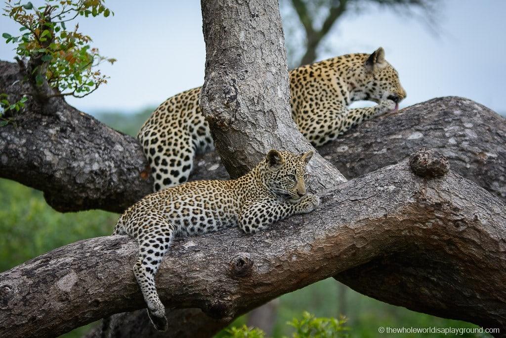 South Africa Kruger Safari Big 5 Best Photos