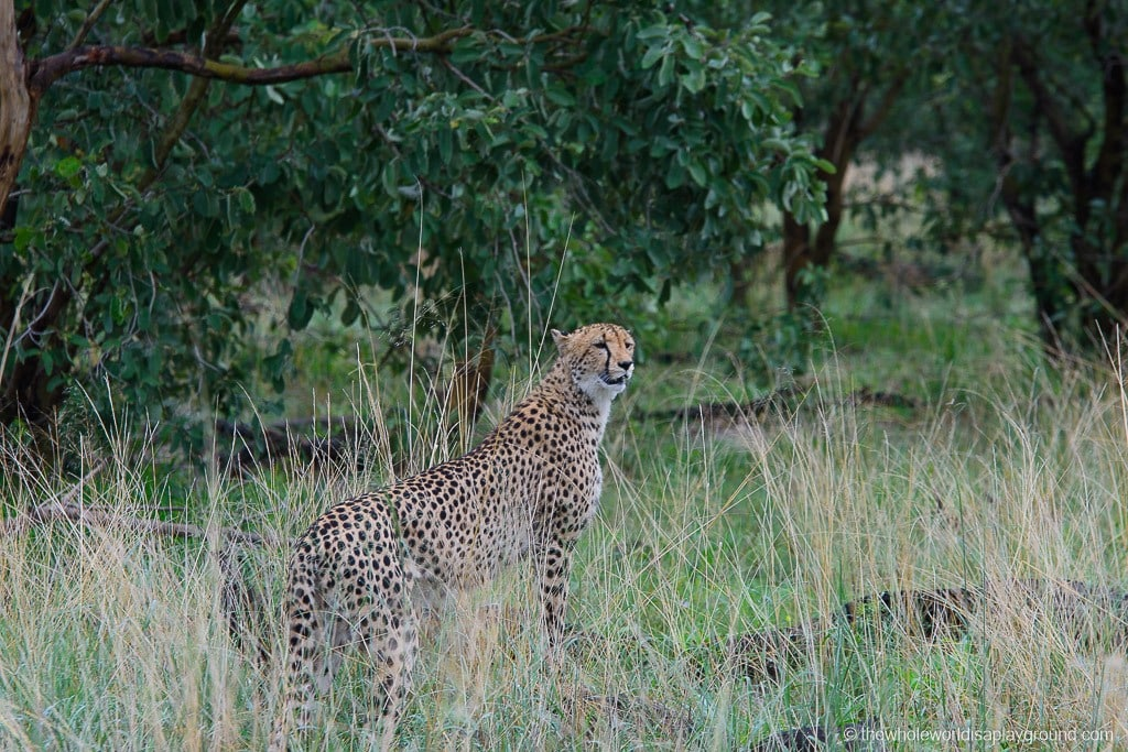 Botswana Little Vumbura Camp Wilderness Safaris Review-31