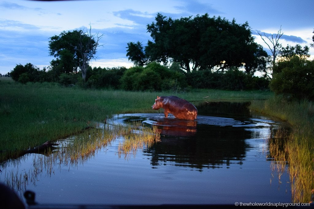 Botswana Little Vumbura Camp Wilderness Safaris Review-38