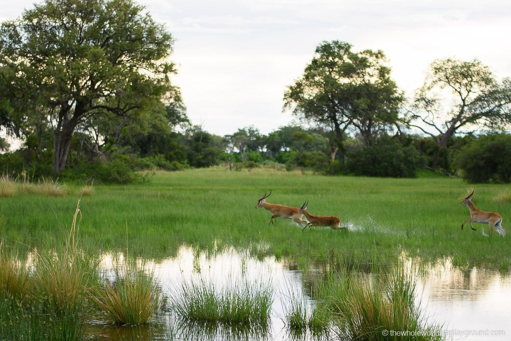 Botswana Little Vumbura Camp Wilderness Safaris Review-5