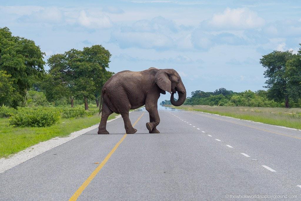 Namibia Botswana Two Week Roundup-10