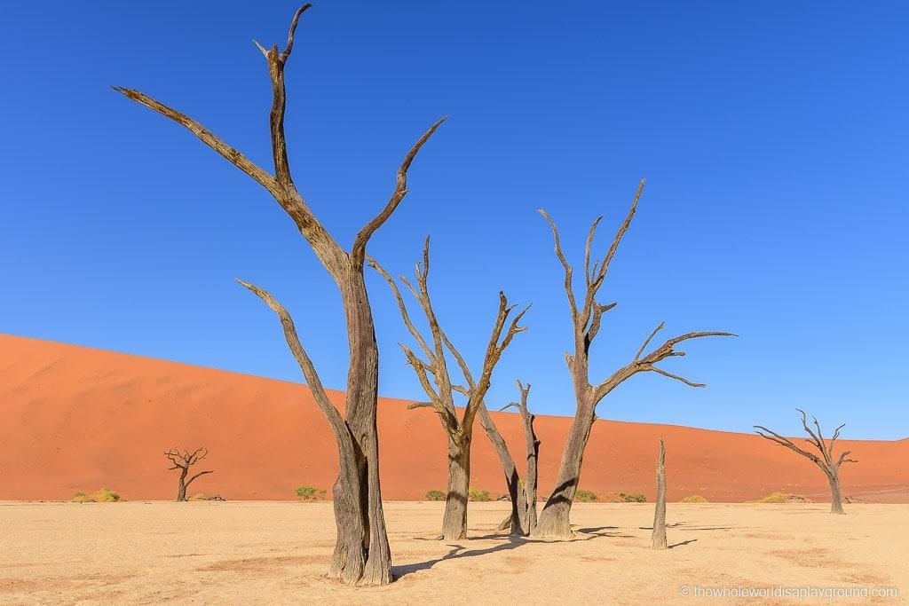 Namibia Botswana Two Week Roundup-3