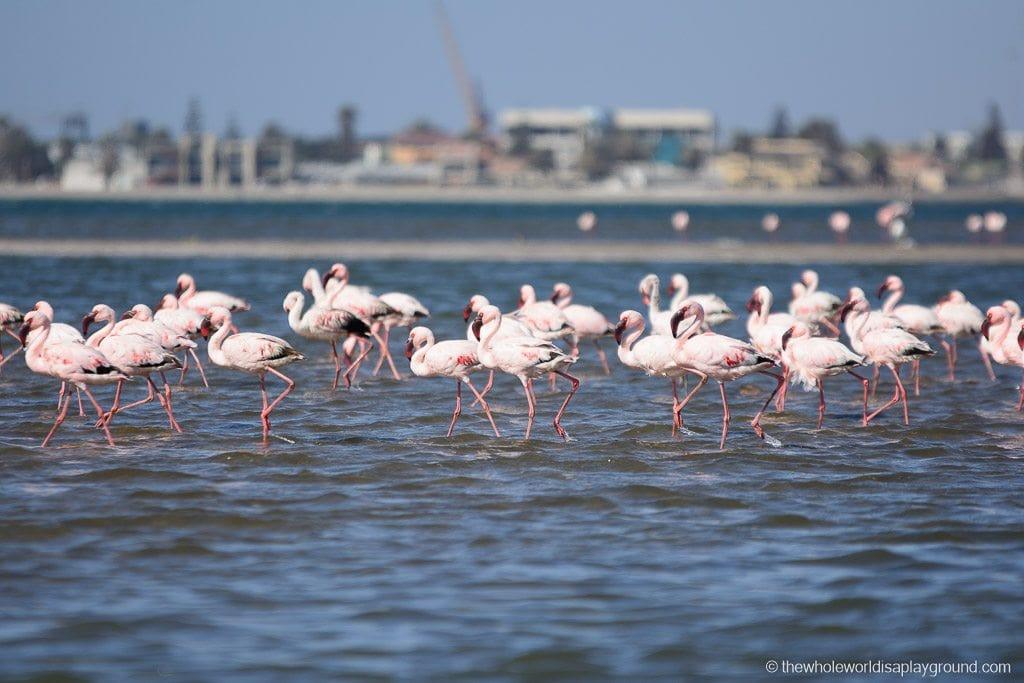 Namibia Botswana Two Week Roundup-6