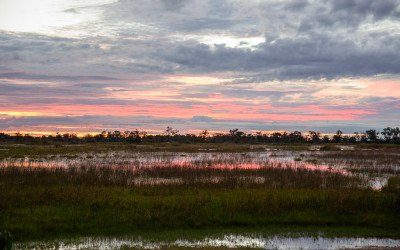 14 magical moments from the Okavango Delta, Botswana!