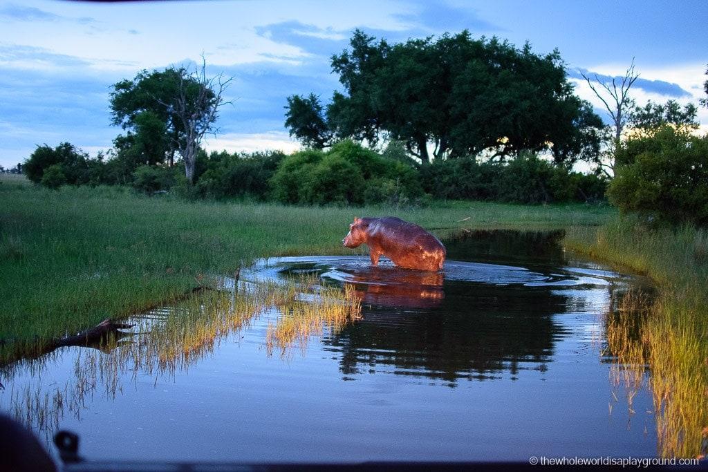 Botswana Okavango Delta Best Moments-14