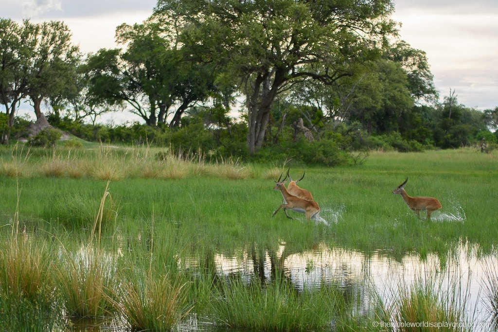 Botswana Okavango Delta Best Moments-16
