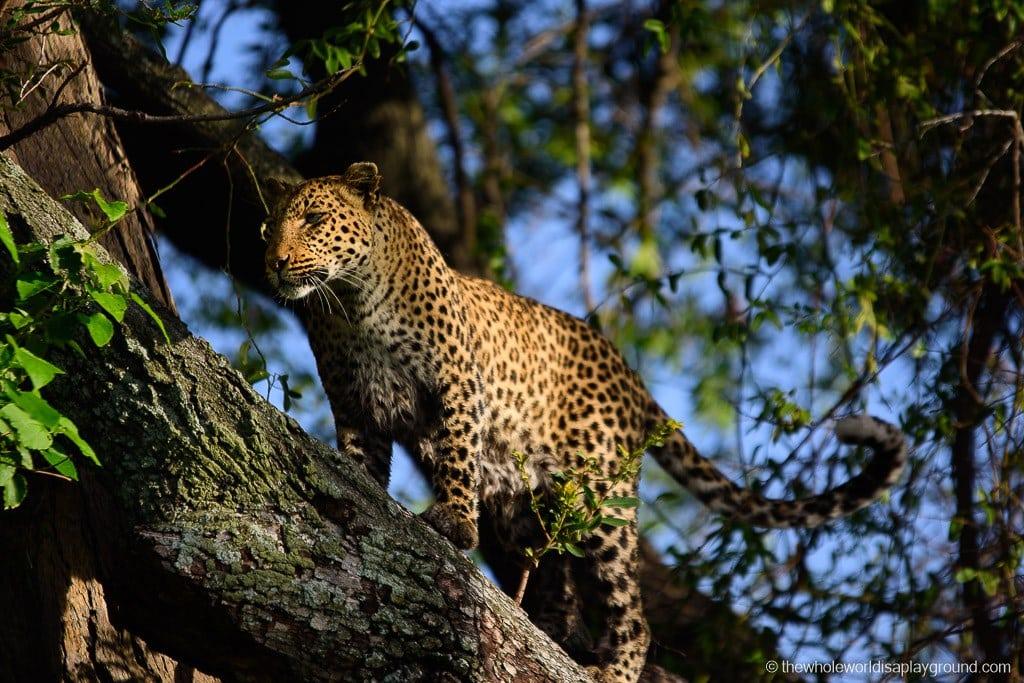 Botswana Okavango Delta Best Moments-17
