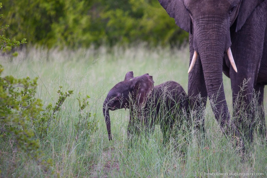 Botswana Okavango Delta Best Moments-20