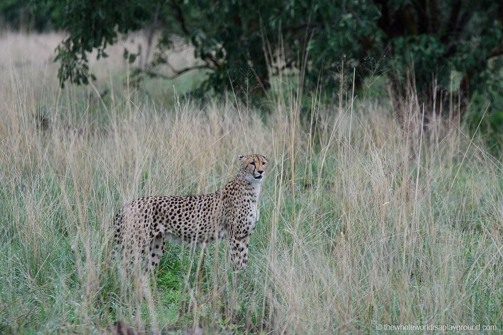 Botswana Okavango Delta Best Moments-22