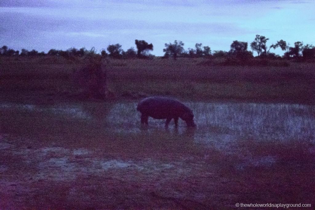 Botswana Okavango Delta Best Moments-24