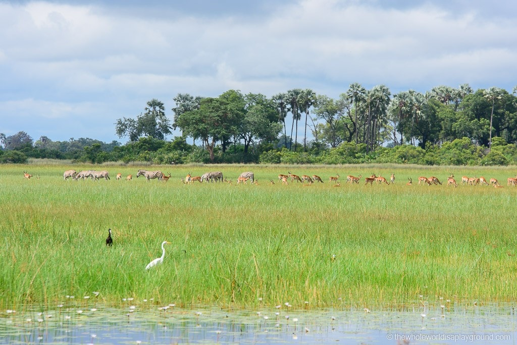 Botswana Okavango Delta Best Moments-30