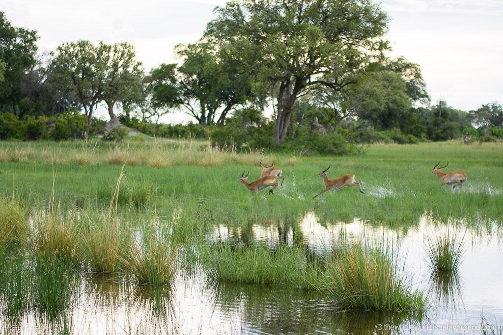 Botswana Safari Day Okavango Delta-2