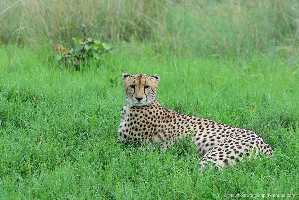 Botswana Safari Day Okavango Delta-25
