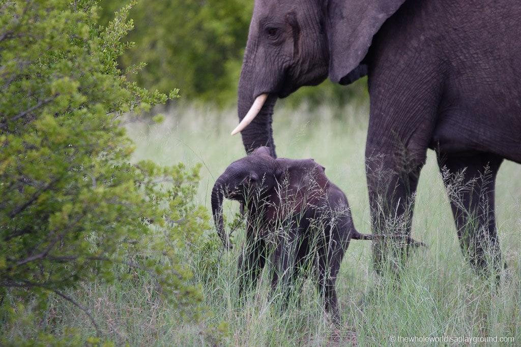 Botswana Safari Day Okavango Delta-3