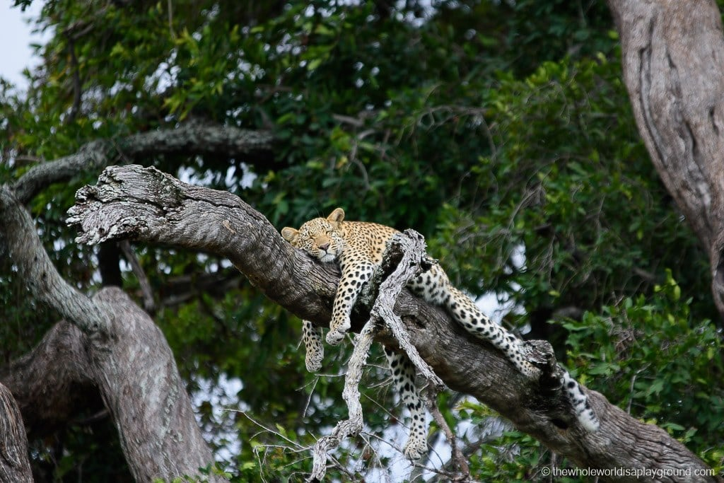 Botswana Safari Day Okavango Delta-31