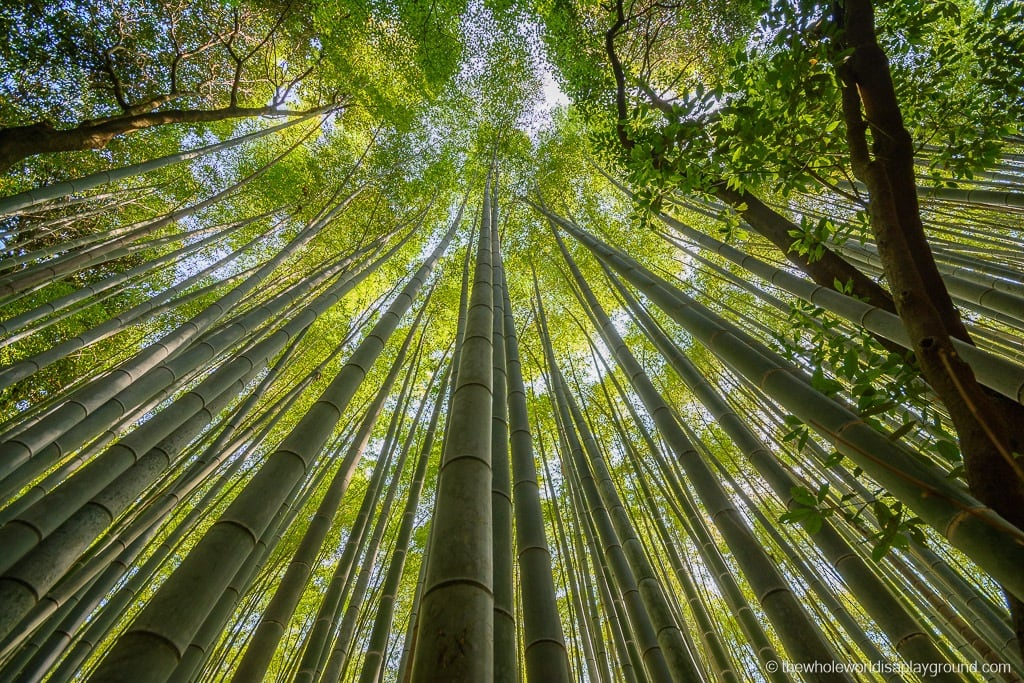 Japan things to do in Kyoto-7
