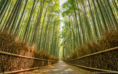 Best Photo Locations in Kyoto, Japan