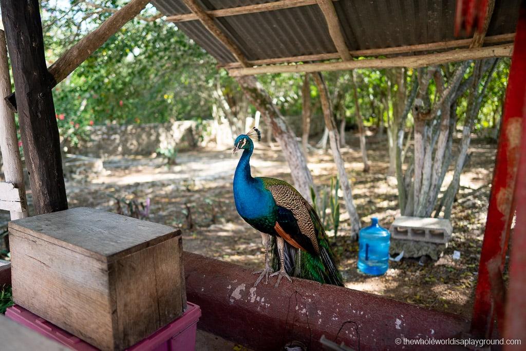 Cenote Suytun