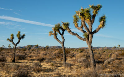 20 Best Things to do in Joshua Tree National Park